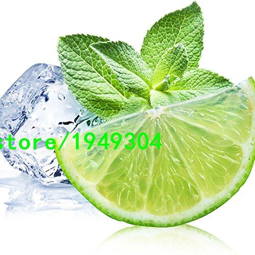 Graines aromatiques de plantes Citron Menthe poivrée Graines de qualité supérieure pour Tisane 200 pièces, blanc, As Show in Description