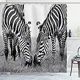 ABAKUHAUS Zebra Duschvorhang, Afrikanischer wild lebender Burchell, mit 12 Ringe Set Wasserdicht Stielvoll Modern Farbfest & Schimmel Resistent, 175x180 cm, Weiß Schwarz