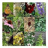 Zoom IMG-2 giardino delle farfalle set regalo