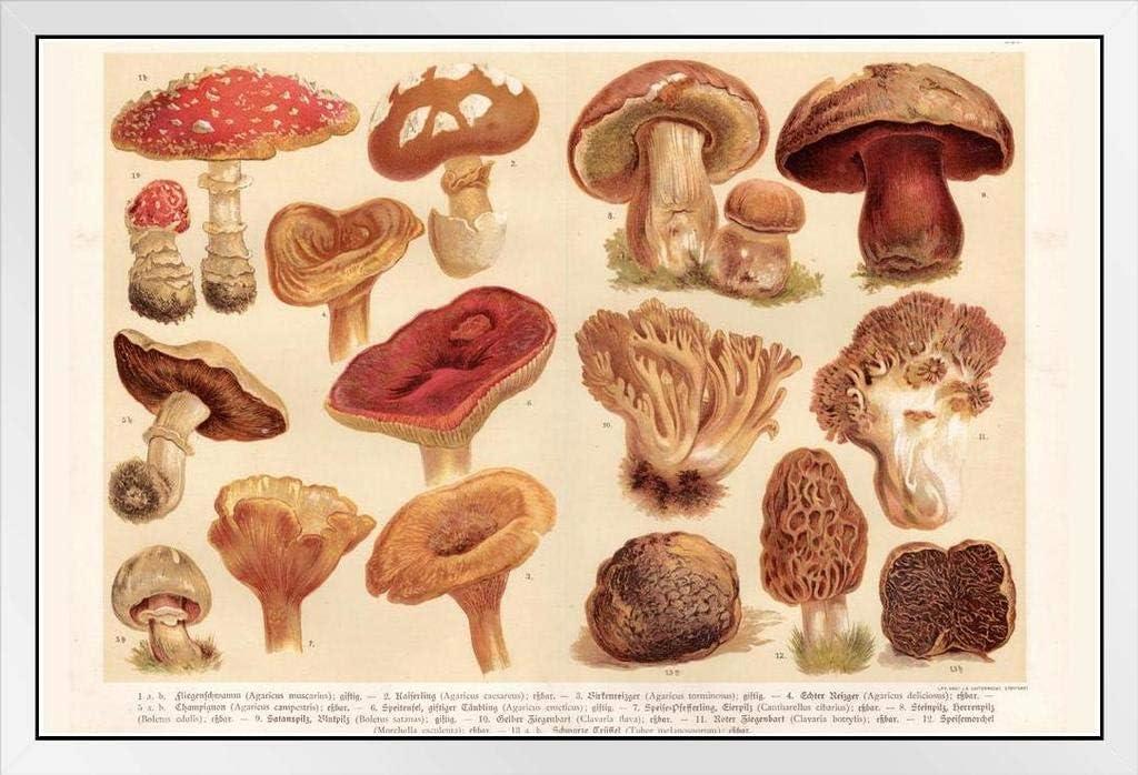 P-344 Art Mushroom Chart Biology Education LW-Canvas Poster 21 24x36in