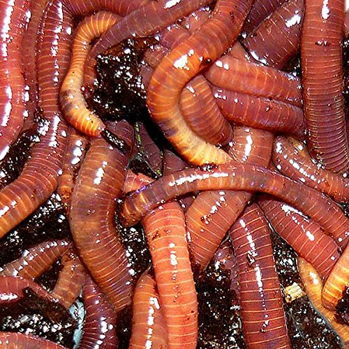 Purchase 2 LBS Composting Mix, Worms