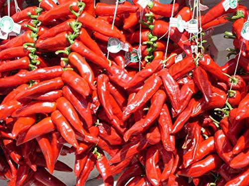 Portal Cool 6 Samen Pfeffer von Espelette (Pfeffer Gorria - Espelette Chili Pepper Seeds)