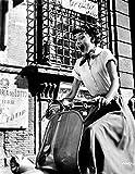Celebrity Photos Audrey Hepburn Roman Holiday Riding Vespa