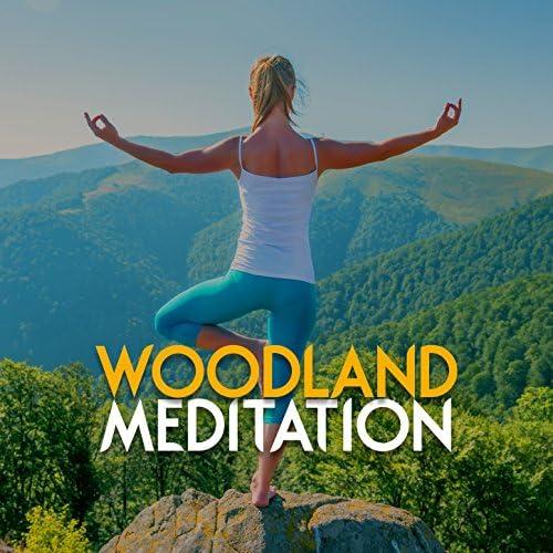 Meditation Sounds of Nature