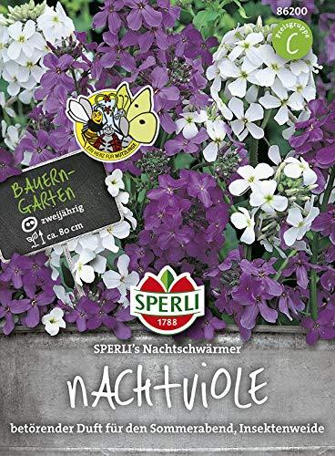 Sperli-Samen Nachtviole SPERLI's Nachtschwärmer