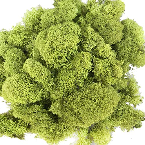 Reindeer Moss Preserved Green Moss for Fairy Gardens, Terrariums, Any Craft or Floral Project or Wedding Other Arts (Chrtreuse 2.5oz)
