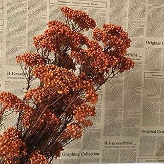 ديكور - زهور صناعية ومجففة - 25-30 جرام من زهرة الدخن المُجففة حديثاً، أرضيات من الزهور الجافة الأبدية المصنوعة منزليًا، خ...