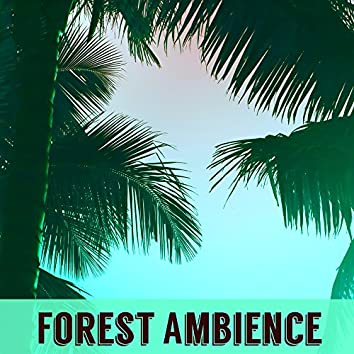 A Forest Ambience - Nocturne Nature Sounds Mother Earth Sleep Music for Relaxation, Meditation, Massage, Yoga Class, Tai Chi, Reiki, Tantra & Zen
