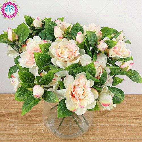 2 pièces / sac graines de fleurs de Gardenia (Cape Jasmine) jardin en pot Bonsai odeur incroyable et de belles fleurs pour chambre bateau libre 1