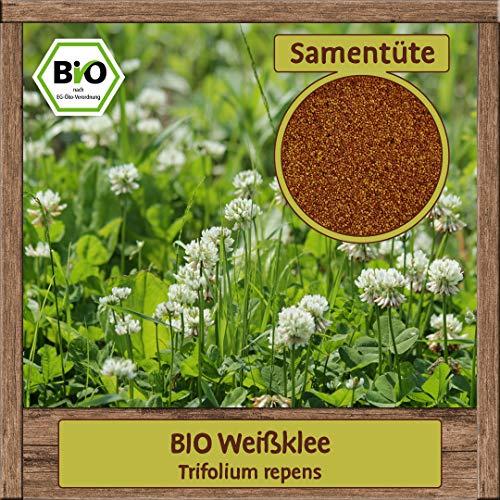 Samenliebe 4g BIO Weißklee Samen Trifolium repens mehrjährig Saatgut für ca. 4m²