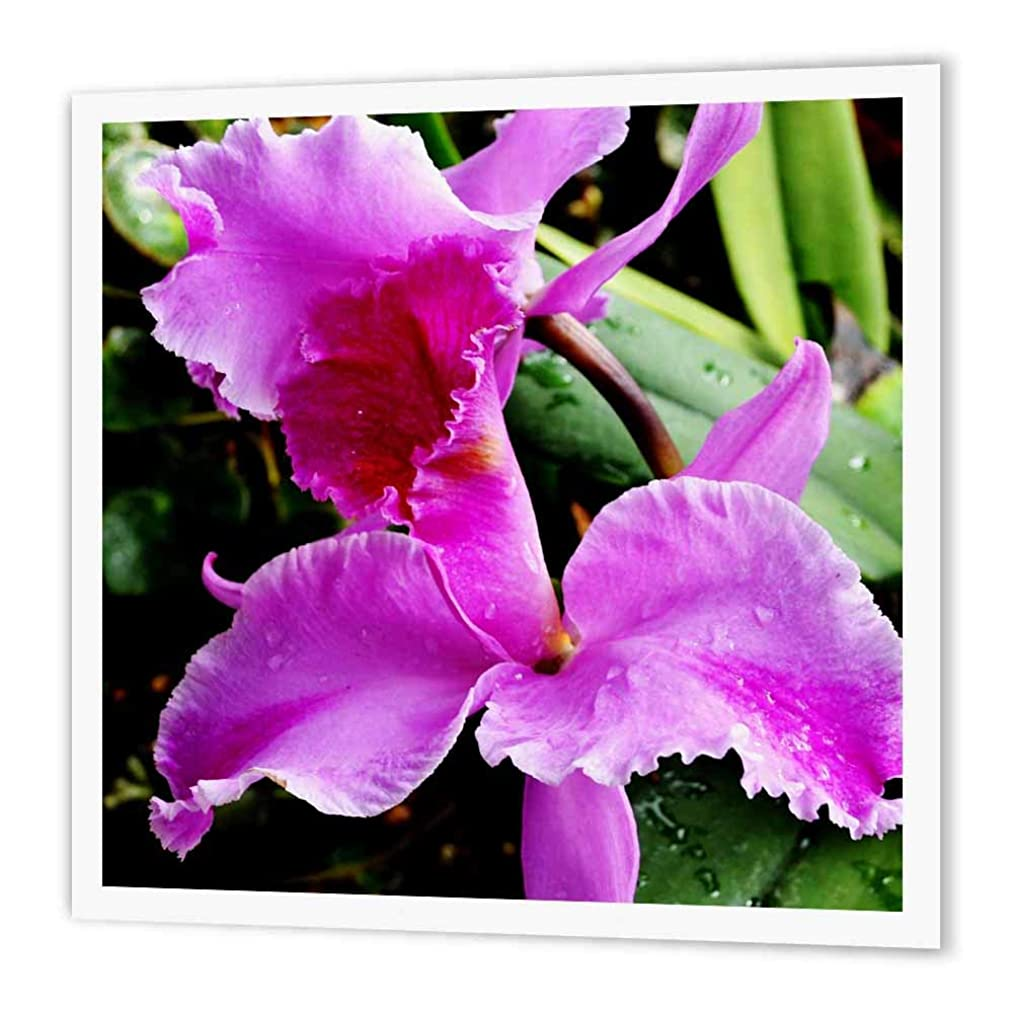 3dRose ht_179653_3 Beautiful Fancy Petal Purple Orchid Flower-Iron on Heat Transfer Paper for White Material, 10 by 10-Inch