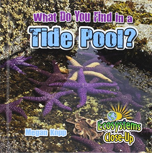 What Do You Find in a Tide Pool? (Ecosystems Close-Up)