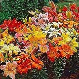 Auleset 100 unidades por bolsa de lirio de flores fáciles de cultivar plantas de escritorio decoración colorida floración sala de estar en maceta de jardín plántulas para parque - semillas