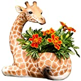 Bits and Pieces - Indoor/Outdoor Giraffe Planter - Wildlife Animal Urn for Plants - Durable...