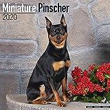 Miniature Pinscher Calendar 2020