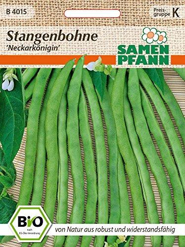 Samen Pfann B4015 Stangenbohne Neckarkönigin (Bio-Stangenbohnensamen)