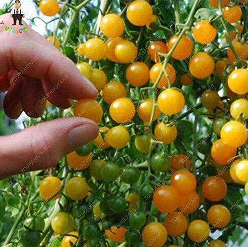 100pcs Violet Tomates cerises Fruits semences balcon et légumes Bonsai Seed Facile à cultiver jardin Plantes en pot Ciel bleu