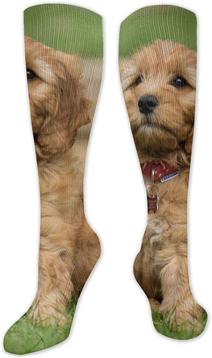 Goldendoodle Puppy Knee High Socks Leg Warmer Dresses Long Boot Stockings For Womens Cosplay Daily Wear