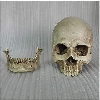 XYXZ Anatomy Models Human Skull Art - Resin Head Skull Sculpture Sketch Model - 1: 2 Scientific Anatomy Skull Head Muscle ...