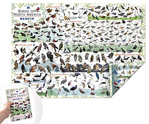 BESPIN Reversible Bird Map of North America