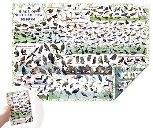 BESPIN Reversible Bird Map of North America - A2 Size Bird Guide - Water Proof- Tear Resitant - Portable -583 Birds
