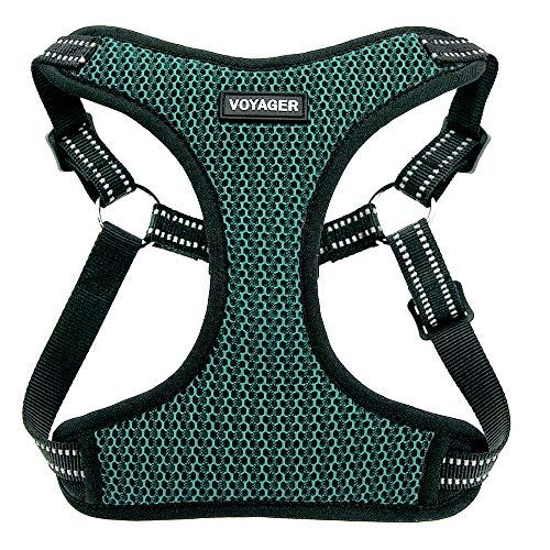 Voyager Step-In Flex Dog Harness - All Weather Mesh, Step In Adjustable Harness for Small and Medium Dogs by Best Pet Supplies - Turquoise Base, Small