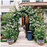 Arco de Rosas para Enredaderas Plantas trepadoras Melones Frutas, 220x180cm 230x200cm Arco de jardín con Base, Resistente a la Intemperie (Color : Dark Green, Size : H220xW240cm)
