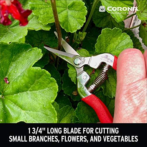 Corona AG 4930SS Long Straight, Stainless Steel Snip