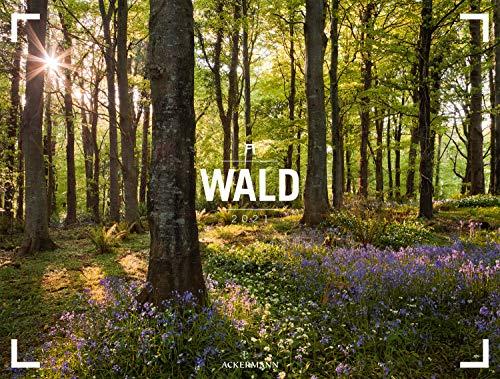 Wald - Gallery Kalender 2021, Wandkalender im Querformat (66x50 cm) - Großformat / Hochwertiger Panorama-Kalender Natur, Wälder und Bäume