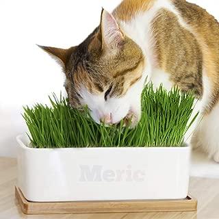 Meric Cat Grass