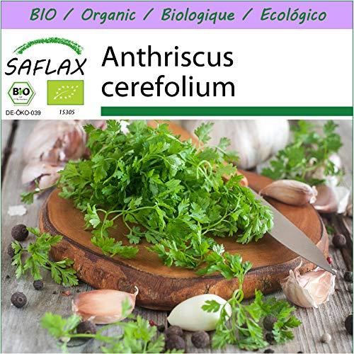 SAFLAX - BIO - Cerfoglio - 800 semi - Anthriscus cerefolium