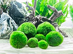 This Marimo Combo Pack includes 2 Giant Marimo (2 inches in Diameter), 2 Medium Marimo (around 1.5 inches), and 3 Small/Nano Marimo (around 1 inch) Great for providing Oxygen and clean water for Fish and invertebrates Does not need special or high in...