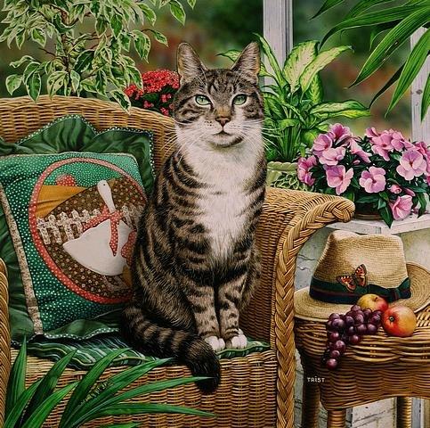LRG. Hemingway el gato en la silla en el invernadero, impresión por Geoff Tristram, gato atigrado tamaño de la imagen Aproximadamente 12x 12cm aprox.