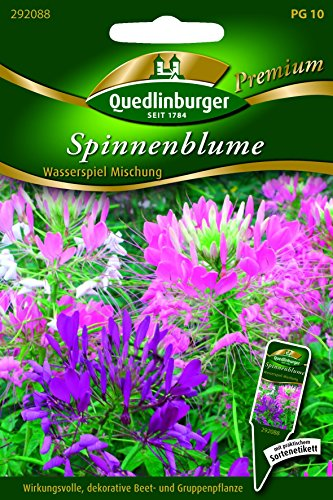Spinnenblume Wasserspiel Misch QLB Premium Saatgut Blumenmischung