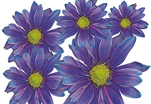 Autoaufkleber, Blumendesign: Flower Set 05-Mini-36 Stück