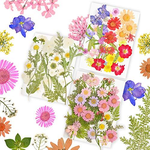 114 piezas de bricolaje conjunto de flores secas, flores de margarita secas naturales reales Múltiples flores coloridas mezcladas prensadas Flores secas reales Joyería de resina Artesanía de uñas
