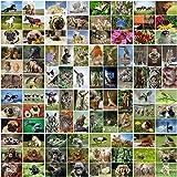 100 tarjetas postales ANIMALES en el set, todas las postales de animales de todo el mundo / 14,8 x 10,5 cm de imagen grande / brillante: ideal para coleccionistas, escuelas o postcrossing de EDITION COLIBRI