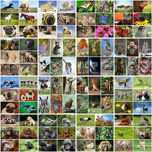 100 Tierpostkarten/Postkarten Tiere im Set, brillanter Bilderdruck, alles verschiedene Tiermotive aus aller Welt - ideal für Sammler, Schulen oder für Postcrossing von EDITION COLIBRI