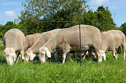 Eider Elektronetz, Schafnetz OviNet grün 108cm, Doppelspitze - 50m - Schafe, Lämmer - 14 standfeste Kunststoffpfähle Doppelspitze