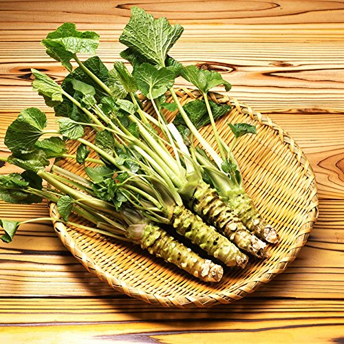 100 PC semillas semillas de rábano picante japonés Wasabi vegetablesfor planta de jardín de casa