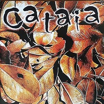 Cataia