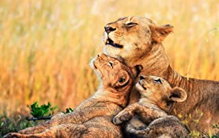 KaoHun Lions Lioness Cubs Africa - Animal Picture Art Canvas Print Poster,Home Wall Decor 30x20 inches