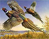 LKAZLL Oil Painting Kits DIY Paint by Numbers Adult Canvas Home Decoration Art Wall Gift Two Pheasants 16x20 inch