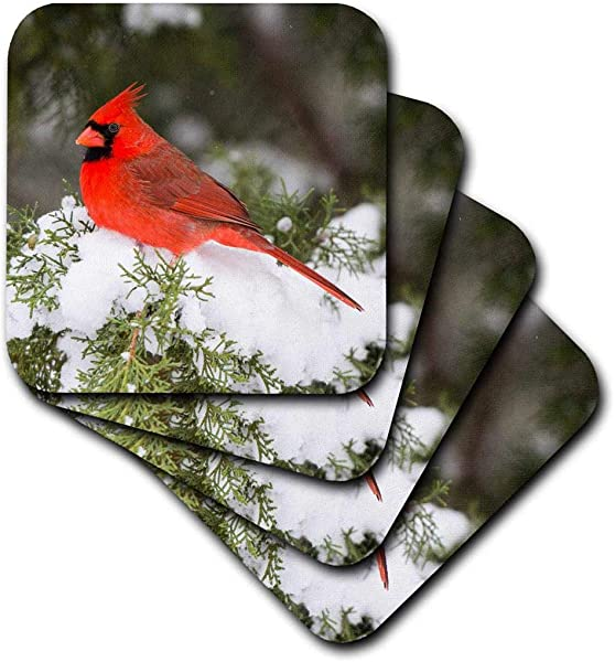 3dRose Illinois USA Northern Cardinal Male In Juniper Tree In Winter Soft Coasters Set Of 4 Cst 209787 1