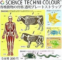 脊椎動物の骨格 透明プレートストラップ全8種 ガチャ