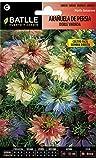 Semillas de Flores - Arauela de Persia doble variada - Batlle