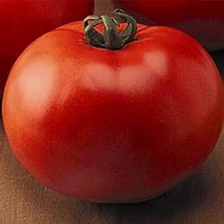 Tomato Garden Seeds - Goliath Hybrid - 100 Seeds - Non-GMO, Vegetable Gardening Seed