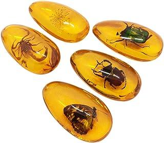 LIOOBO Fósil Ámbar con Muestras de Insectos Piedras Especímenes de Cristal Colección de Decoradores para El Hogar Colgante Ovalado para Niños (Patrón Aleatorio)