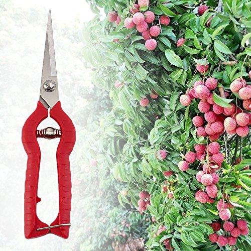 Flor Planta Plante élagage Ciseaux Jardin Cisailles Cutter Fleur à la main Sécateur Outil DIY l'Outil Parfait pour le jardinier et la famille Worldwi