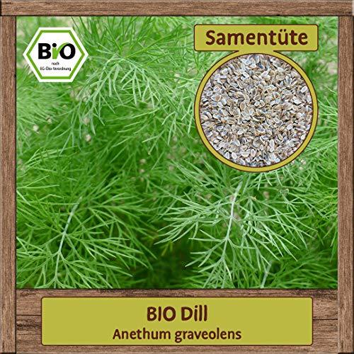 BIO Dill Samen Sorte (Anethum graveolens) Kräutersamen Dill Saatgut
